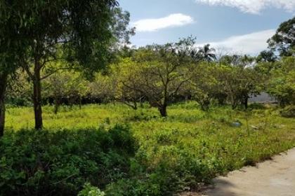 Tiêu chí đất vườn, ao được xác định là đất ở