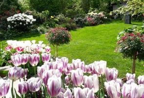 Mẹ Việt biến khu vườn 500 m2 thành 'công viên hoa' đủ màu