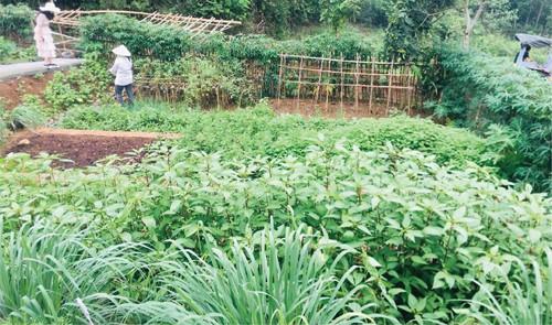 Trang trại cho thuê để trồng rau của một doanh nghiệp ở vùng ven Hà Nội. Ảnh: NVCC