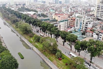 Hà Nội: Chuyển cây xanh phải rà soát tránh lãng phí, gây bức xúc dư luận