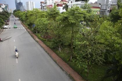 Những dải phân cách xanh mướt bóng cây ở Hà Nội