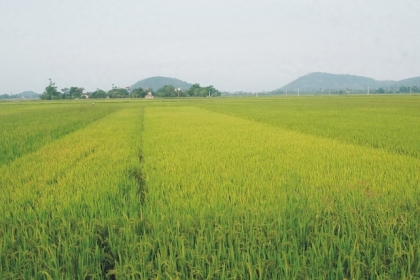 Thủ tướng đồng ý chuyển mục đích sử dụng đất tại 2 tỉnh Thái Nguyên và Quảng Ninh