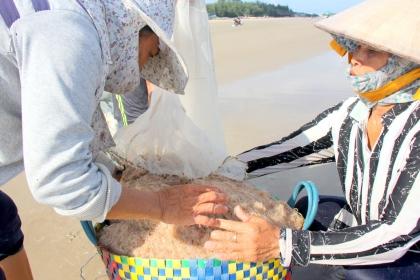 Ruốc kéo vào bờ, người dân Vũng Tàu bắt hàng trăm kg mỗi ngày